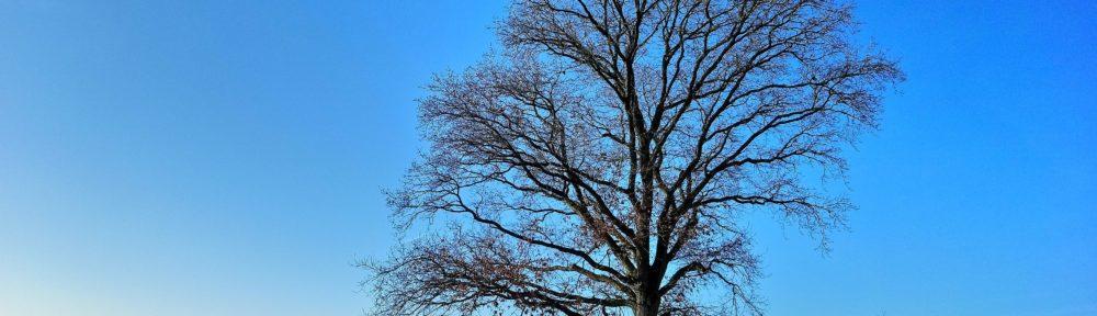 Baum in der Wintersonne auf dem Weg nach Lindenfels/Odenwald