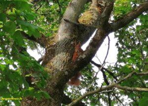 Face 2 face mit dem Eichhörnchen