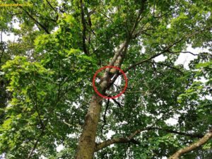 Eichhörnchen markiert